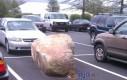 Kamień na parkingu