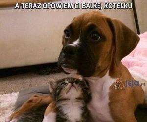 A teraz opowiem ci bajkę, kotełku