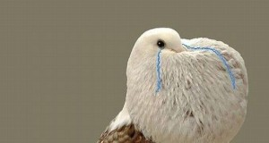 Ptak - Forever Alone
