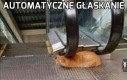 Zaradny ten kot