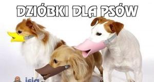 Dzióbki dla psów