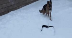 Za 15 zł na godzinę nawet pies odśnieży