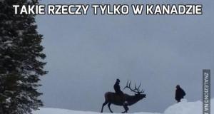Takie rzeczy tylko w Kanadzie
