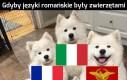 Rumuński nieco odstaje od reszty