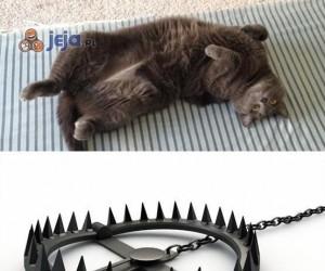 Co widzę, gdy mój kot domaga się pieszczot