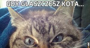 Gdy głaszczesz kota...