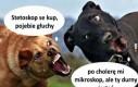 Psie heheszki