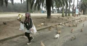 Armia królików