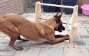 Tania i świetna zabawka dla psa