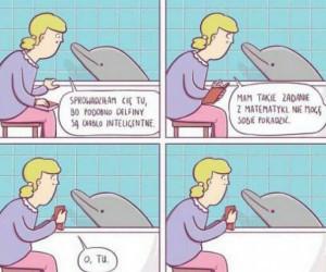 Delfiny to mądre stworzenia