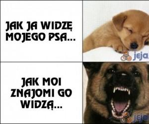 Jak ja widzę mojego psa i jak go widzą inni