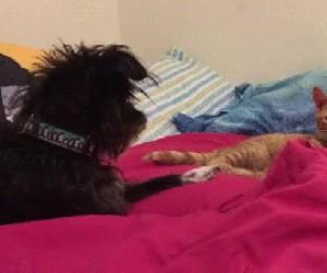 Pies staje w obronie właściciela