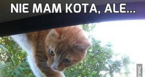 Nie mam kota, ale...