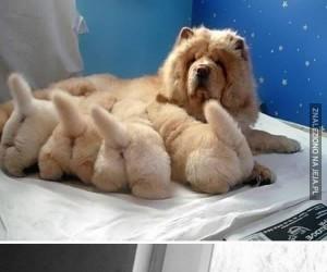 Psy ze swoimi słodkimi miniaturkami