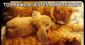 To prawda, jesteś adoptowany