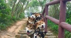 Schody do psiego raju