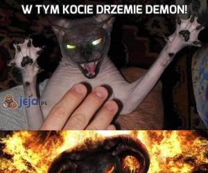 W tym kocie drzemie demon!