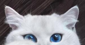 Poznajcie Coby'ego, kota o hipnotyzujących oczach