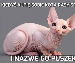 Kiedyś kupię sobie kota rasy Sfinks