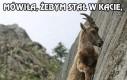 Cwana koza ma karę