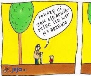 Jak poznać wiek drzewa?