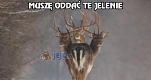 Muszę oddać te jelenie