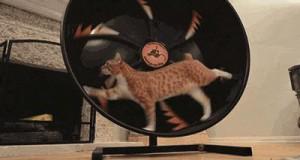 Kocie koło