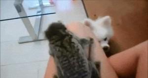 Nie dorwiesz mnie!