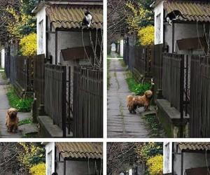 Przyjaźń kota i psa
