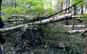 Rąbanie drewna drewnem