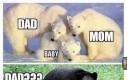 Stereotypy kwitną nawet wśród zwierząt