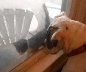 Ten pies ma tę moc!