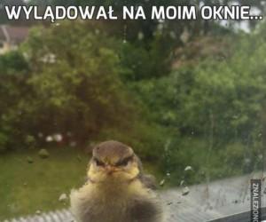 Wylądował na moim oknie...