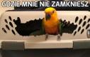 Papugi takie są