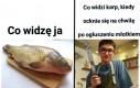 Biedna ryba