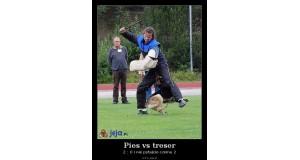 Pies vs treser