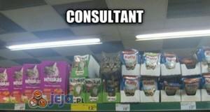 Twój kot wybrałby...