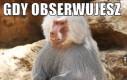 Małpa Niemiec