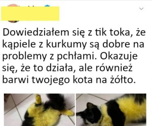 Szarańcza