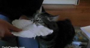 Proszę pani, kot zjadł mi zadanie domowe