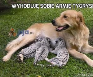 Wyhoduję sobie armię tygrysków!
