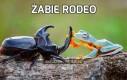 Żabie rodeo
