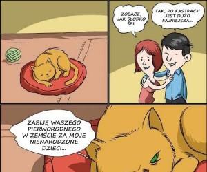 Wykastrowany kot