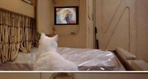 Nie oglądaj telewizji cały dzień