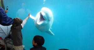 Przybij piątkę delfinowi!
