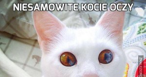 Niesamowite kocie oczy