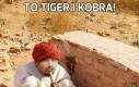 To Tiger i Kobra!
