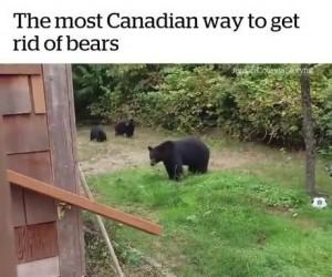 Jak Kanadyjczycy pozbywają się niedźwiedzi