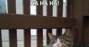 Ha ha ha!