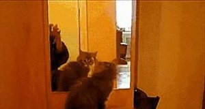 Dziewczyna, gdy rano zobaczy się w lustrze